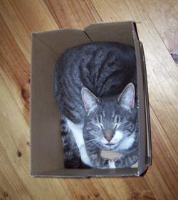 gandalf in a box