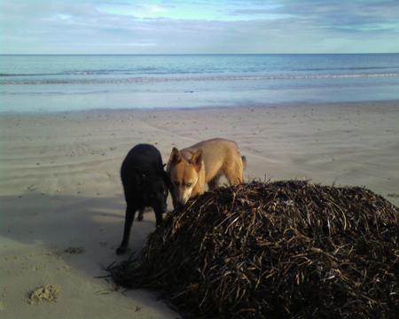 dogsseaweed2.jpg