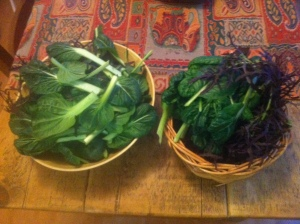 Two bowls of green leafy home grown veg