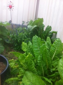 Leafy stuff