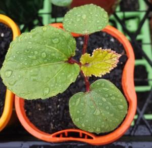 germination!