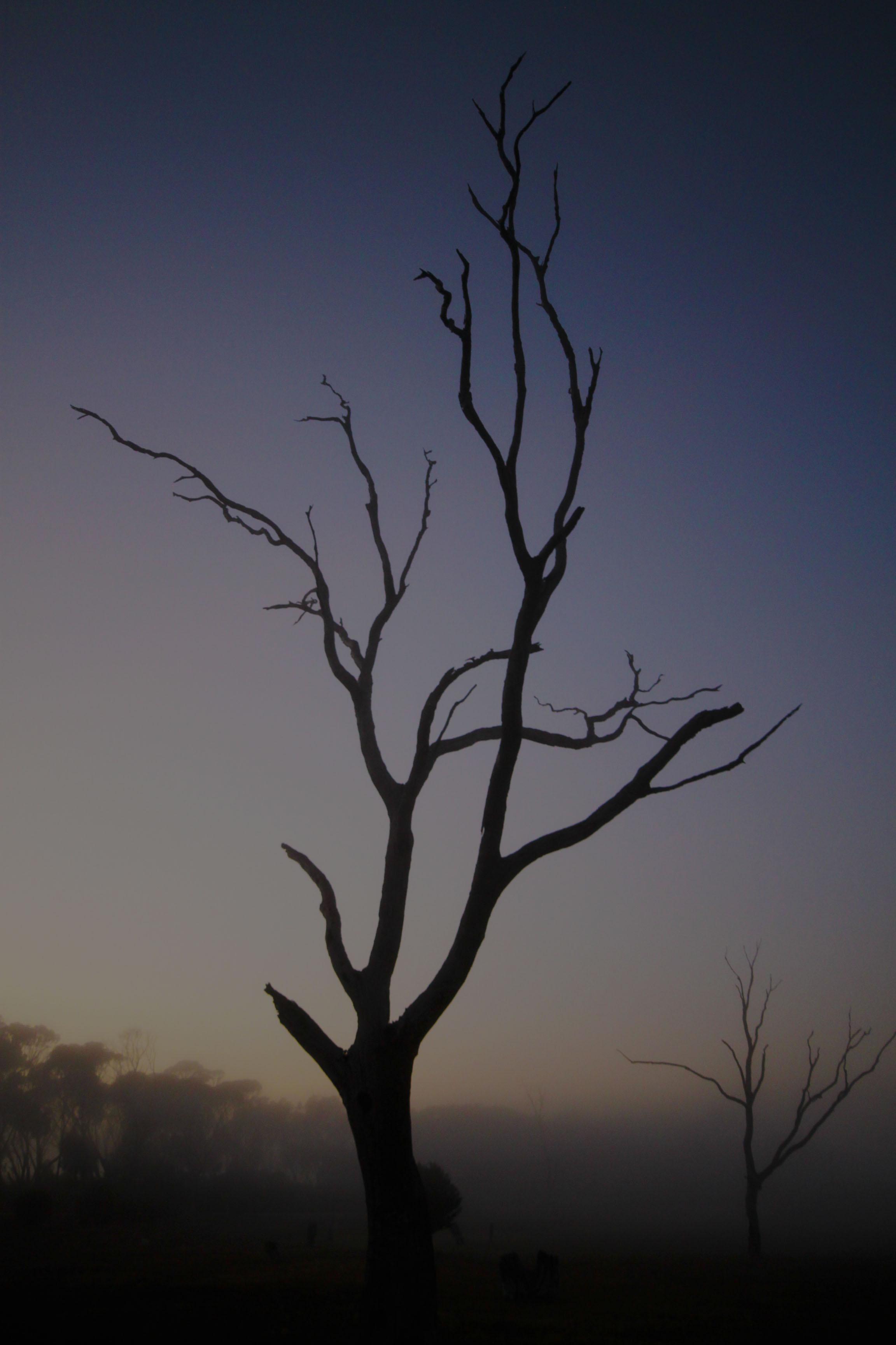 tree lagoon